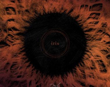 Owl Company - Iris